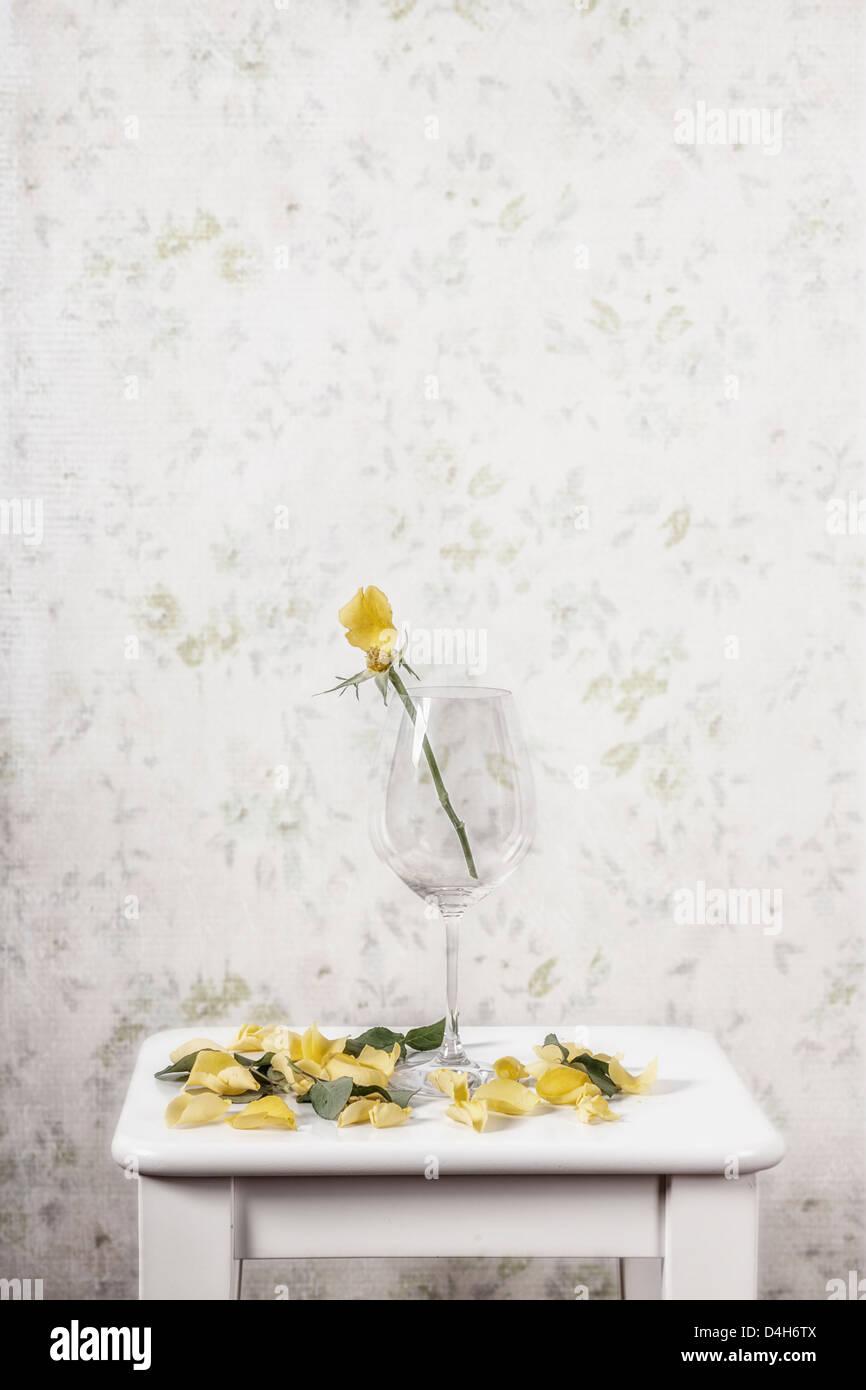 Une rose jaune dans un verre perdu ses pétales Photo Stock