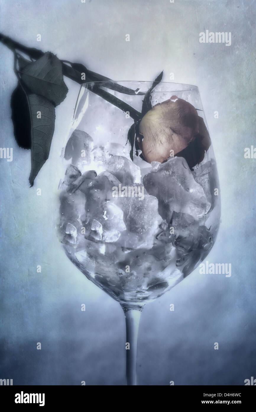 Une rose flétrie dans un verre rempli de cubes de glace Photo Stock