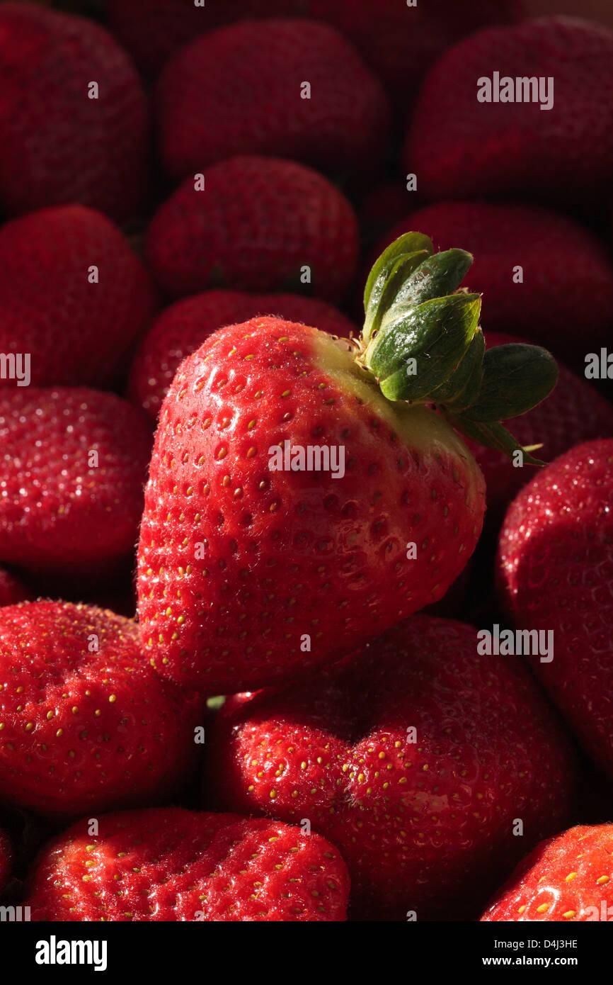 Fraise sur un plateau de fraises Photo Stock