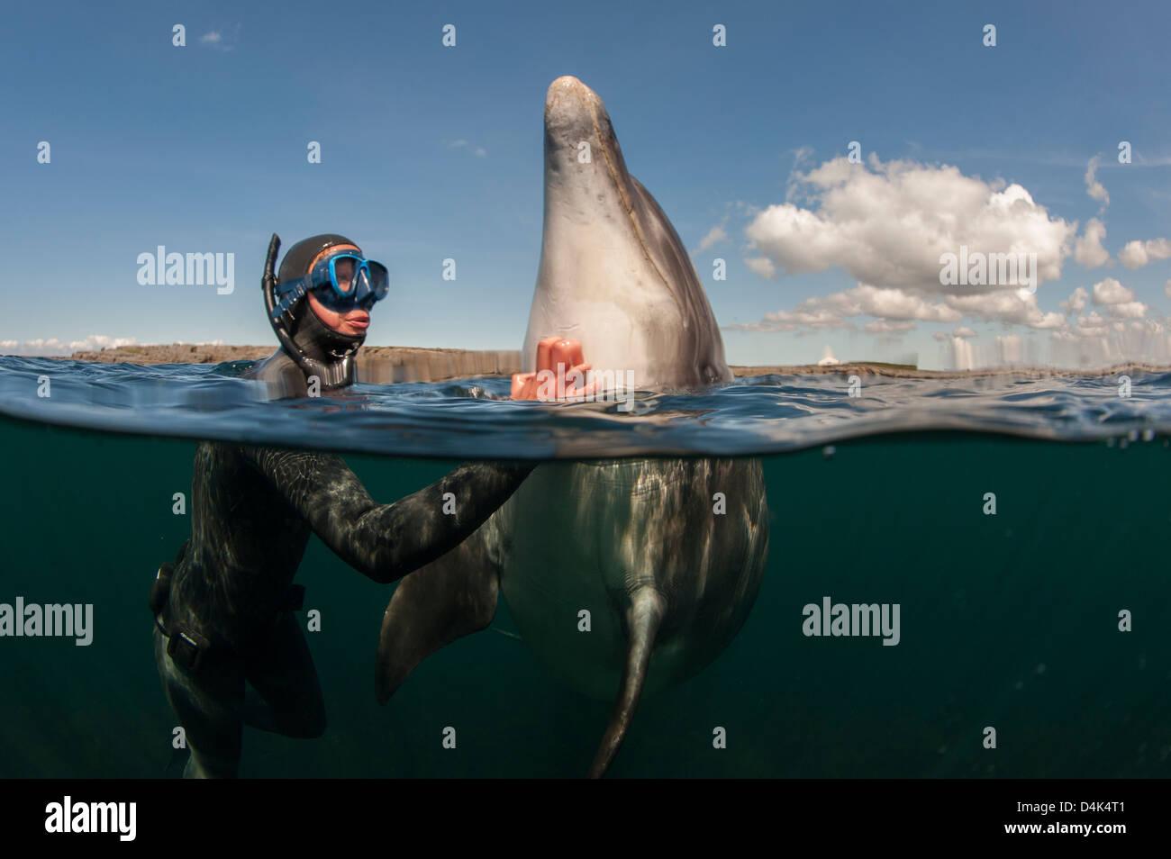 L'éraflure plongeur dans l'eau des dauphins Photo Stock