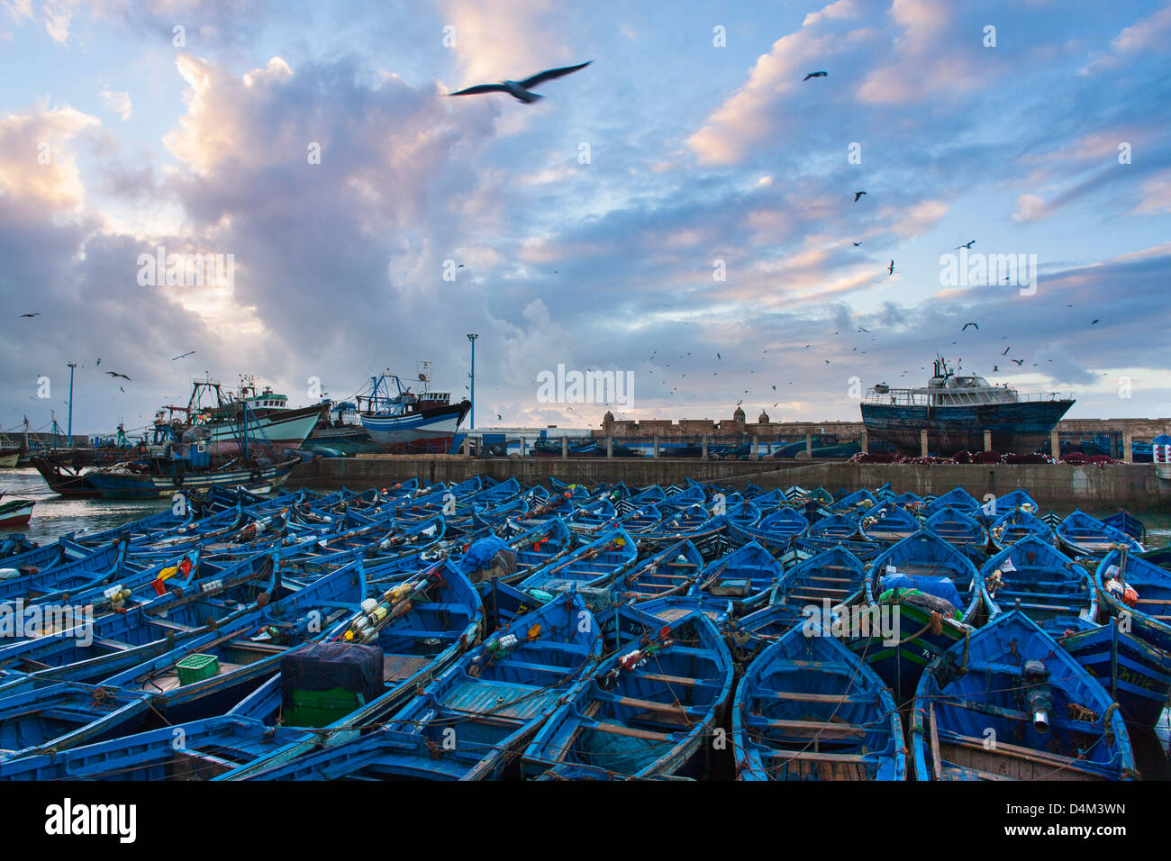 Birds flying over boats in urban harbor Photo Stock