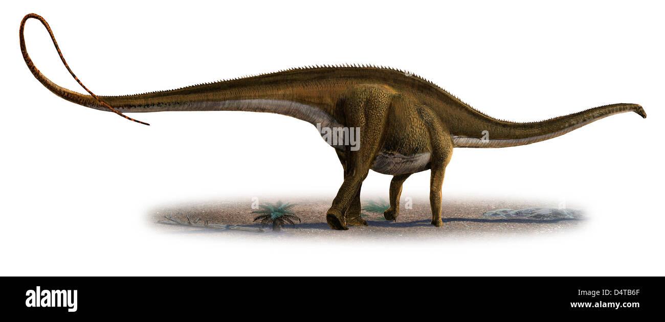 Diplodocus longus photos diplodocus longus images alamy - Dinosaure diplodocus ...
