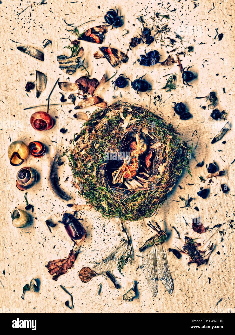 Les plantes et les insectes autour de nest Photo Stock