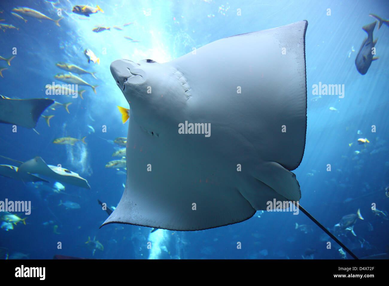 À l'aquarium Atlantis hotel, Dubai, Émirats Arabes Unis Photo Stock