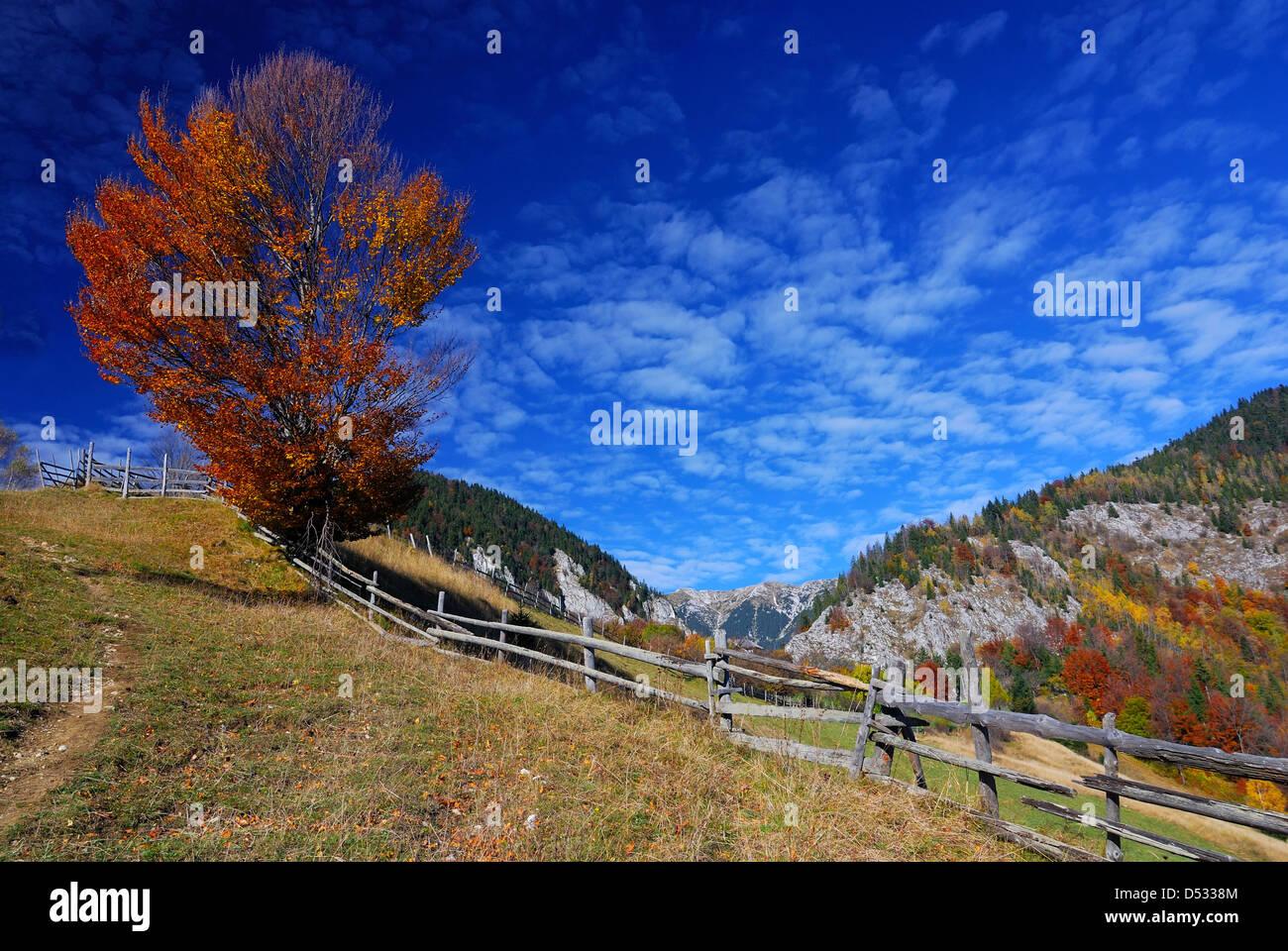 Décor de l'automne dans les montagnes des Carpates, du paysage rural de Magura village à Brasov comté. Photo Stock