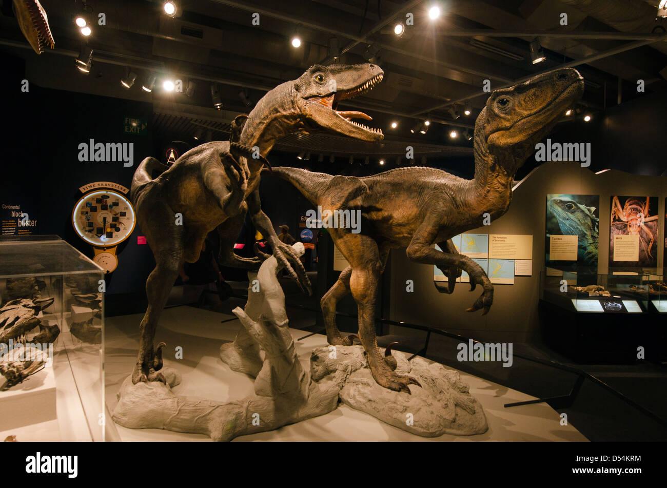 Deux imposants dinosaures au Musée Te Papa à Wellington en Nouvelle-Zélande Photo Stock