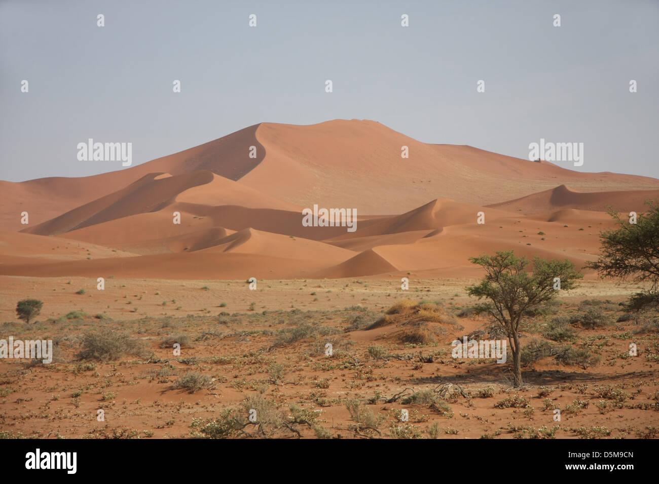Dunes de sable, de Dead Vlei, près de Sossusvlei, Désert du Namib, Namib-Naukluft National Park, Namibie, Afrique Banque D'Images