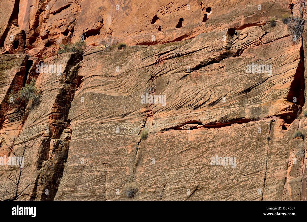 Les lits de grès éoliens sur le rocher. Zion National Park, Utah, USA. Banque D'Images