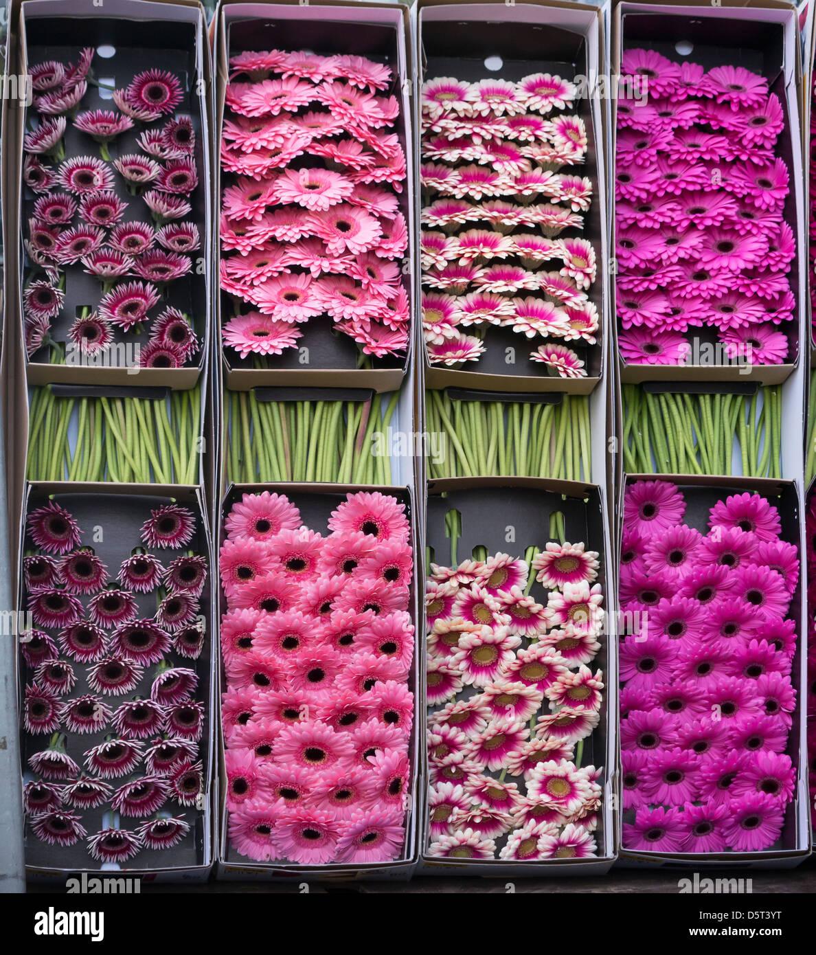Boîtes de fleurs coupées à Columbia Road Flower Market, Londres Photo Stock
