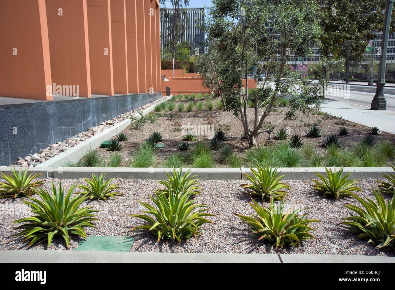 Aménagement de jardin dans le centre-ville de Los Angeles, Californie Photo Stock