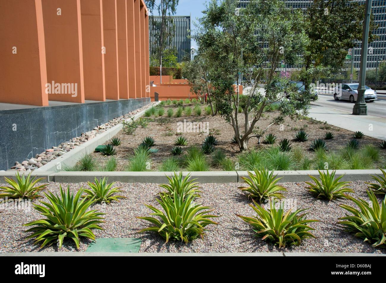 Aménagement de jardin dans le centre-ville de Los Angeles Photo Stock