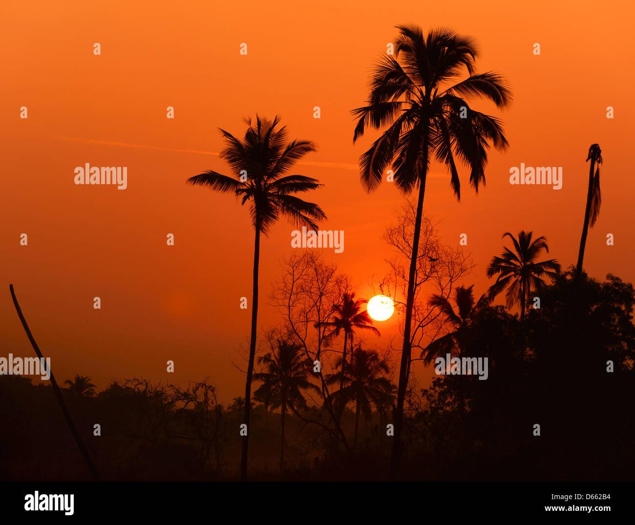 Lever du soleil dans le village de baguette au sud de Goa, Inde Photo Stock