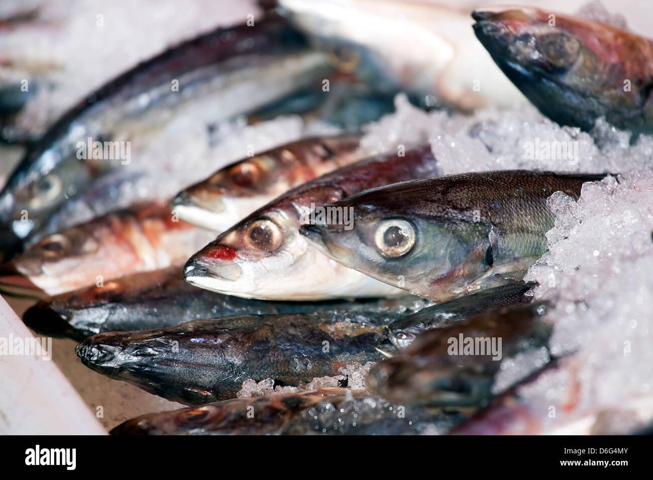Sardines fraîches sur la glace au marché Photo Stock