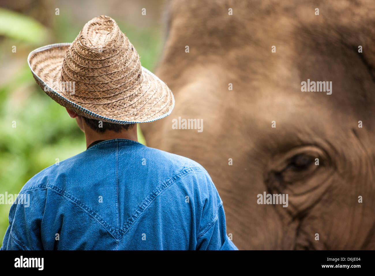 Quatre Saisons Elephant Camp, dans le Nord de la Thaïlande, en Asie du Sud-Est, l'Asie Photo Stock