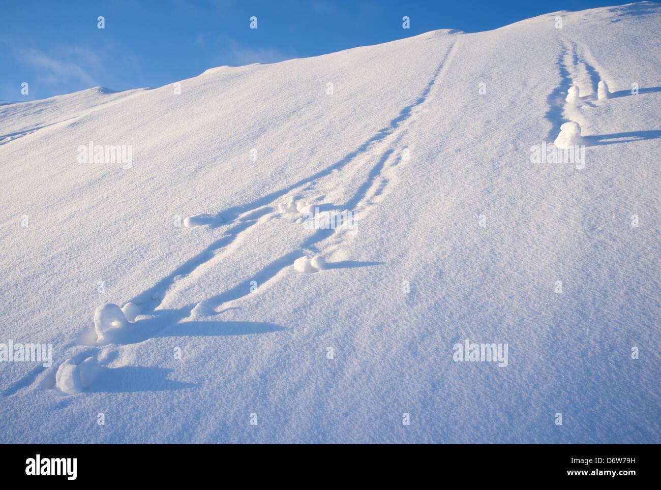Boules de neige dévalant à pente raide , Finlande Photo Stock