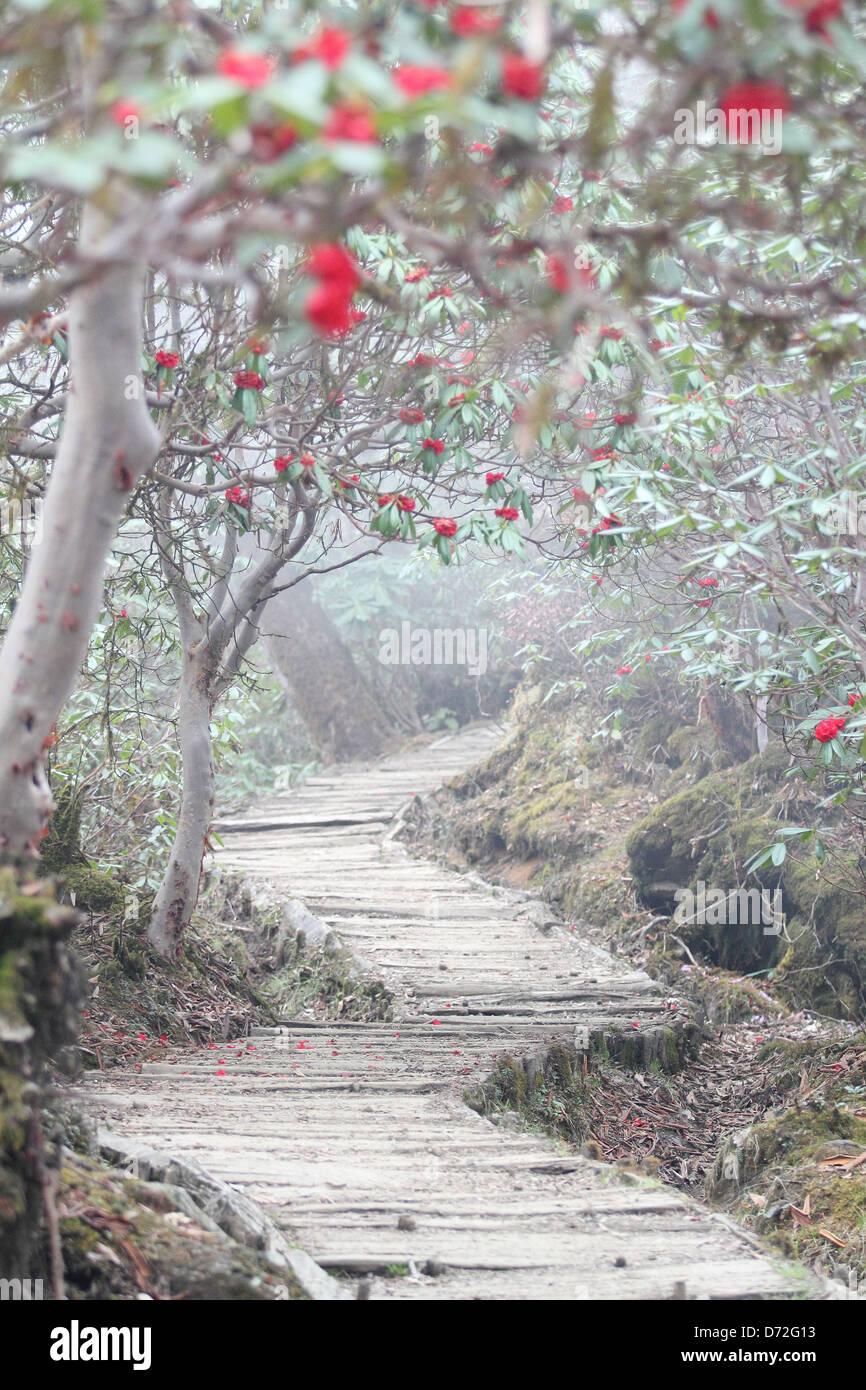 Des sentiers de randonnée. Geochala Photo Stock