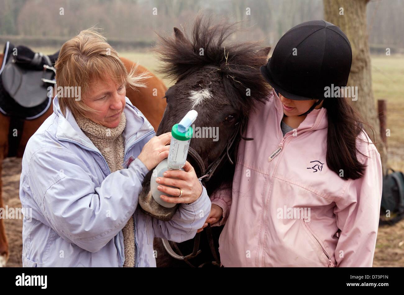 Un propriétaire de donner son cheval un inhalateur d'asthme médicaments pour traitement, UK Photo Stock