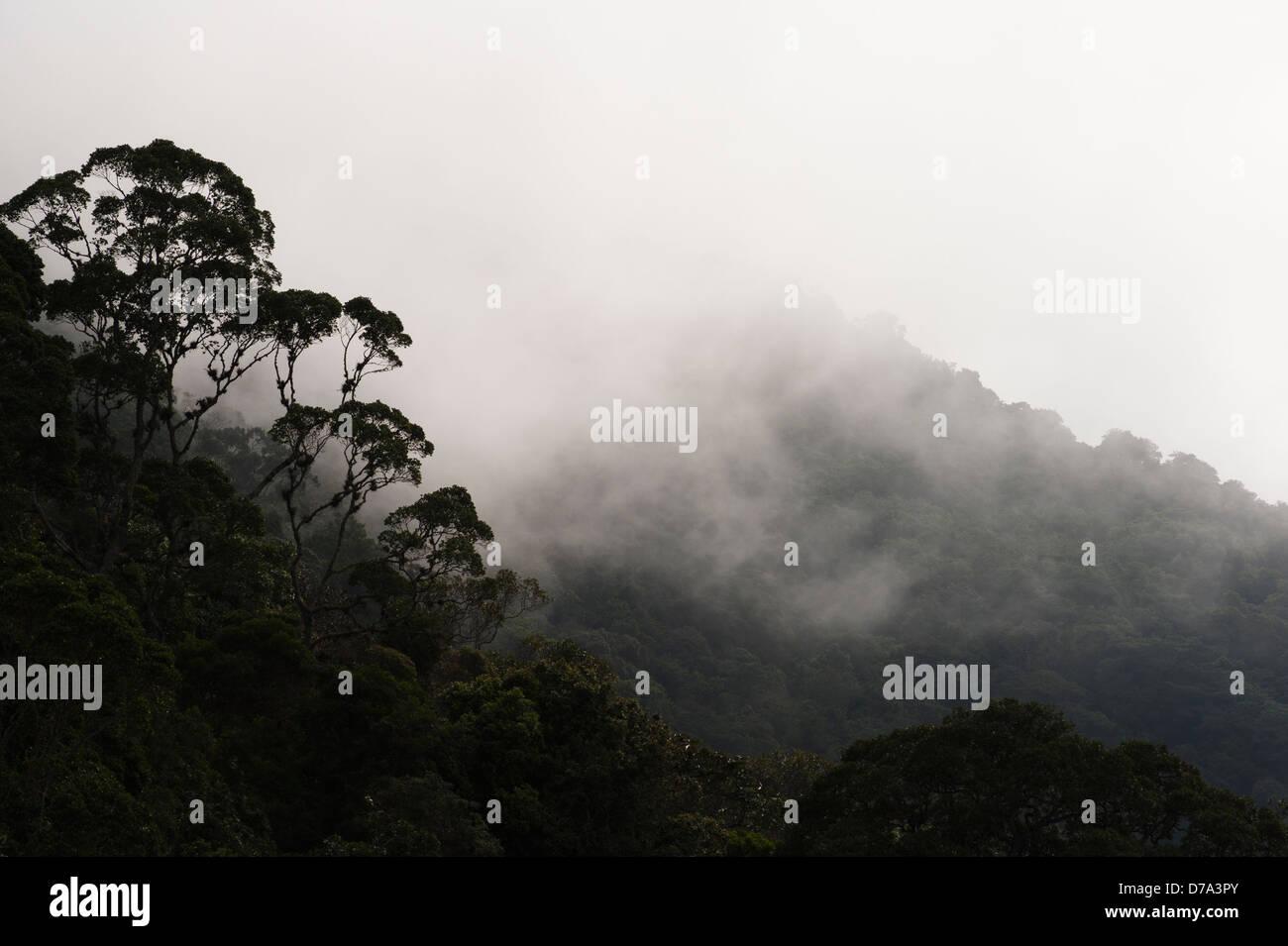 Colombie - Misty rain forest dans la Sierra Nevada de Santa Marta Photo Stock