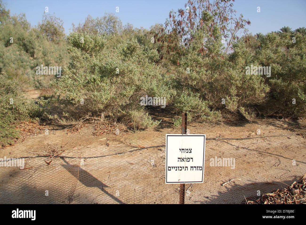 Middle Eastern plantes médicinales cultivées dans le kibboutz Ketura dans la région de l'Arava Photo Stock
