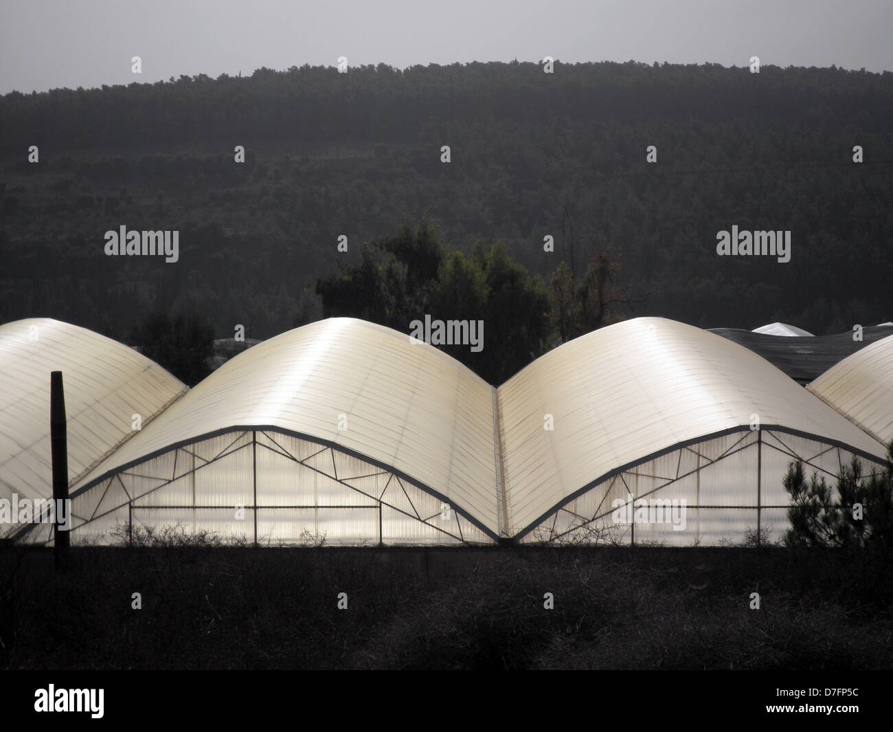 Serres en Mei Ami, coopérative, près de Wadi Ara, Israël Photo Stock