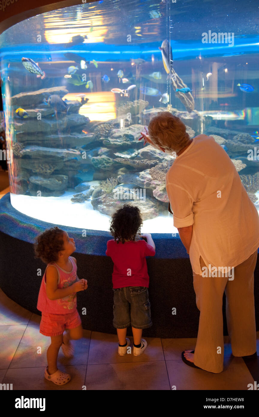 Two Oceans Aquarium, Victoria & Alfred Waterfront, Cape Town, Afrique du Sud Photo Stock