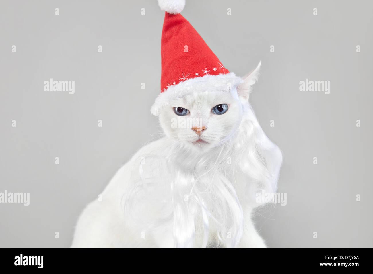 Santa cat woman contre l'arrière-plan gris Photo Stock