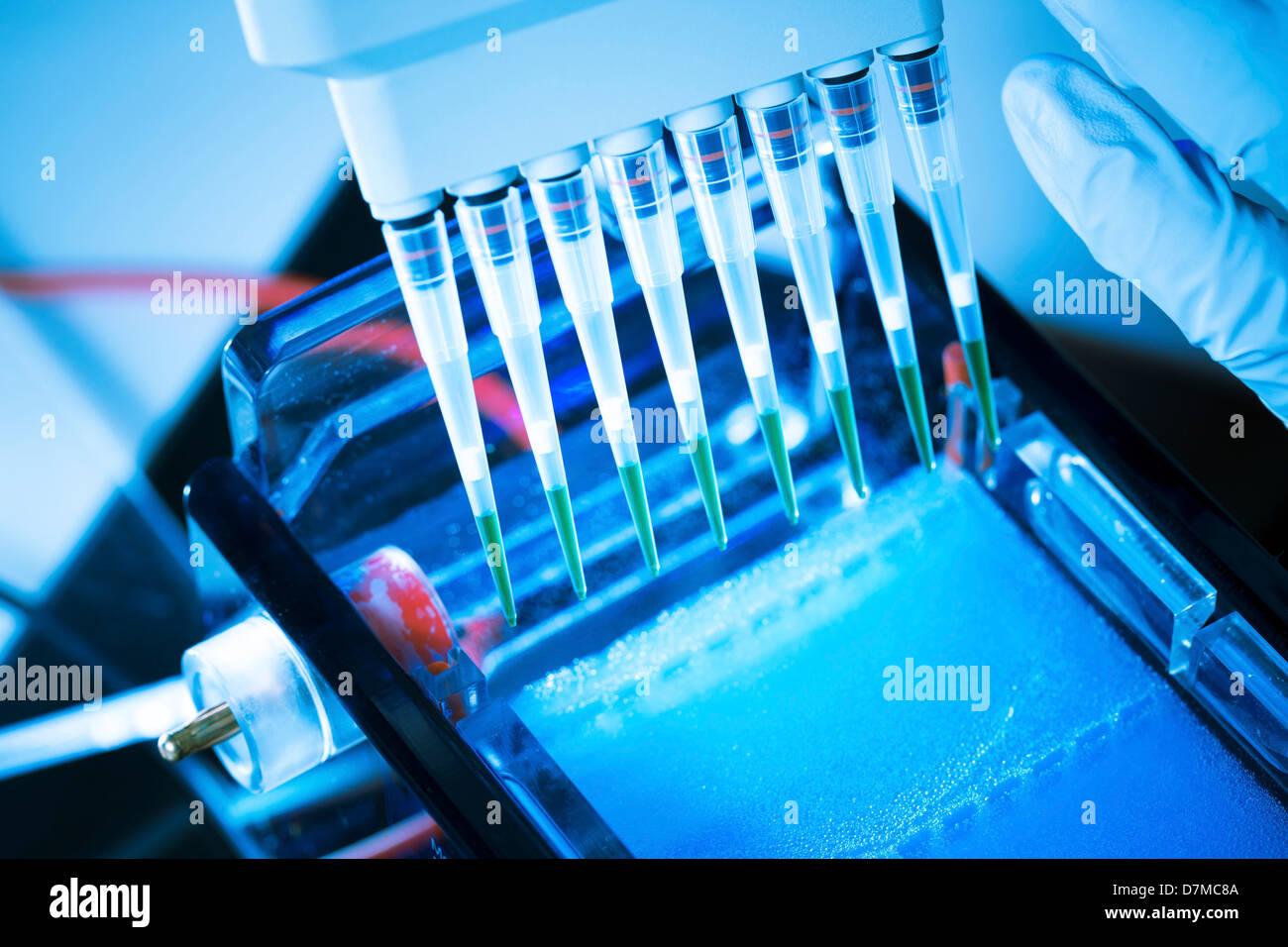 L'électrophorèse sur gel Photo Stock