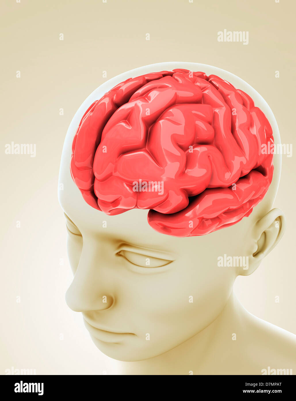 Cerveau humain, artwork Photo Stock