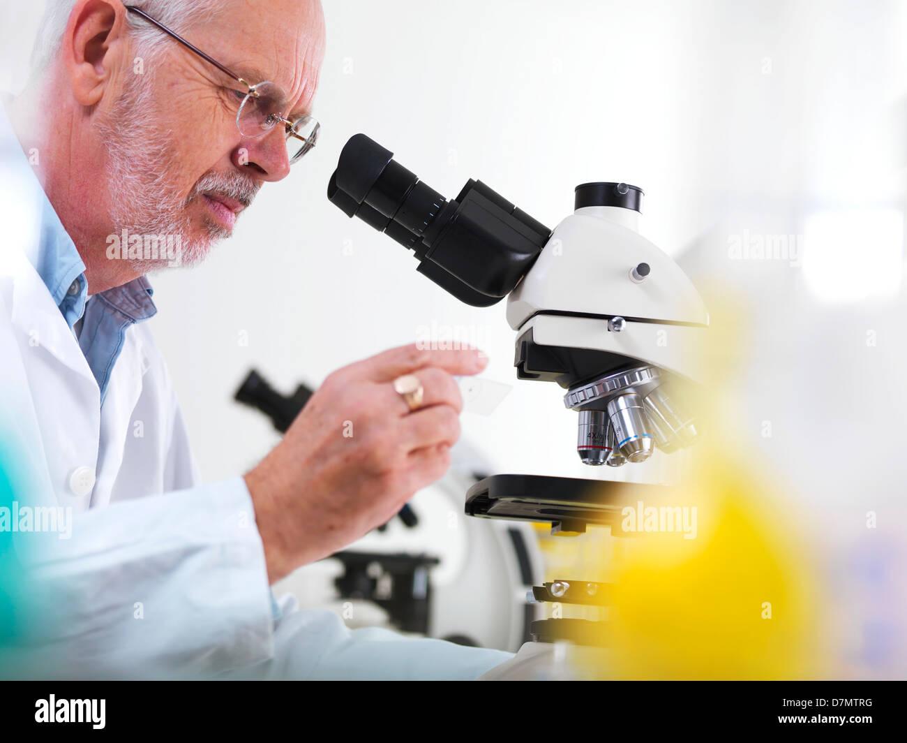 La recherche biologique Photo Stock