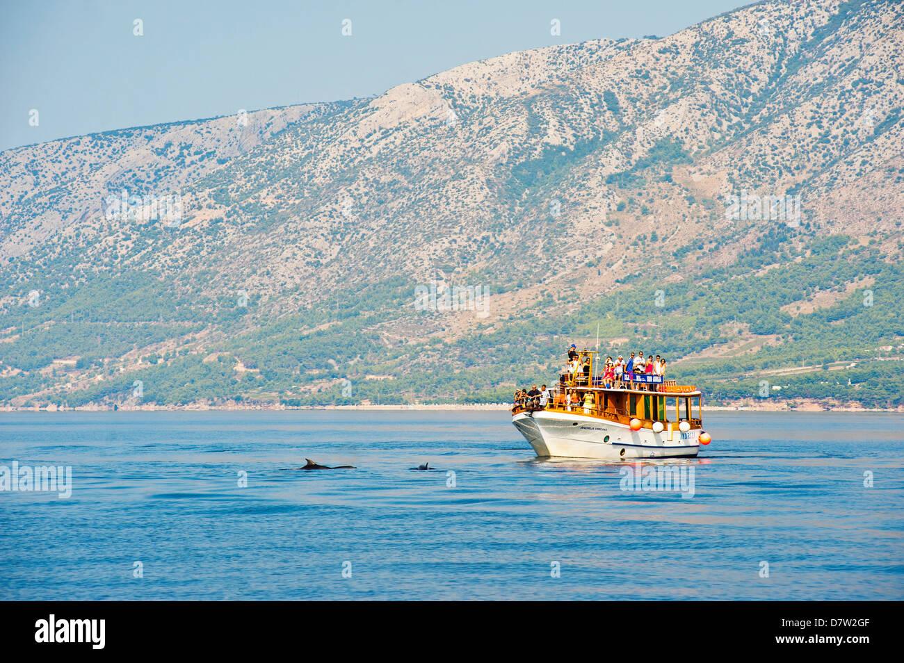 Des dauphins en bateau au large de l'île de Brac, côte dalmate, Adriatique, Croatie Photo Stock