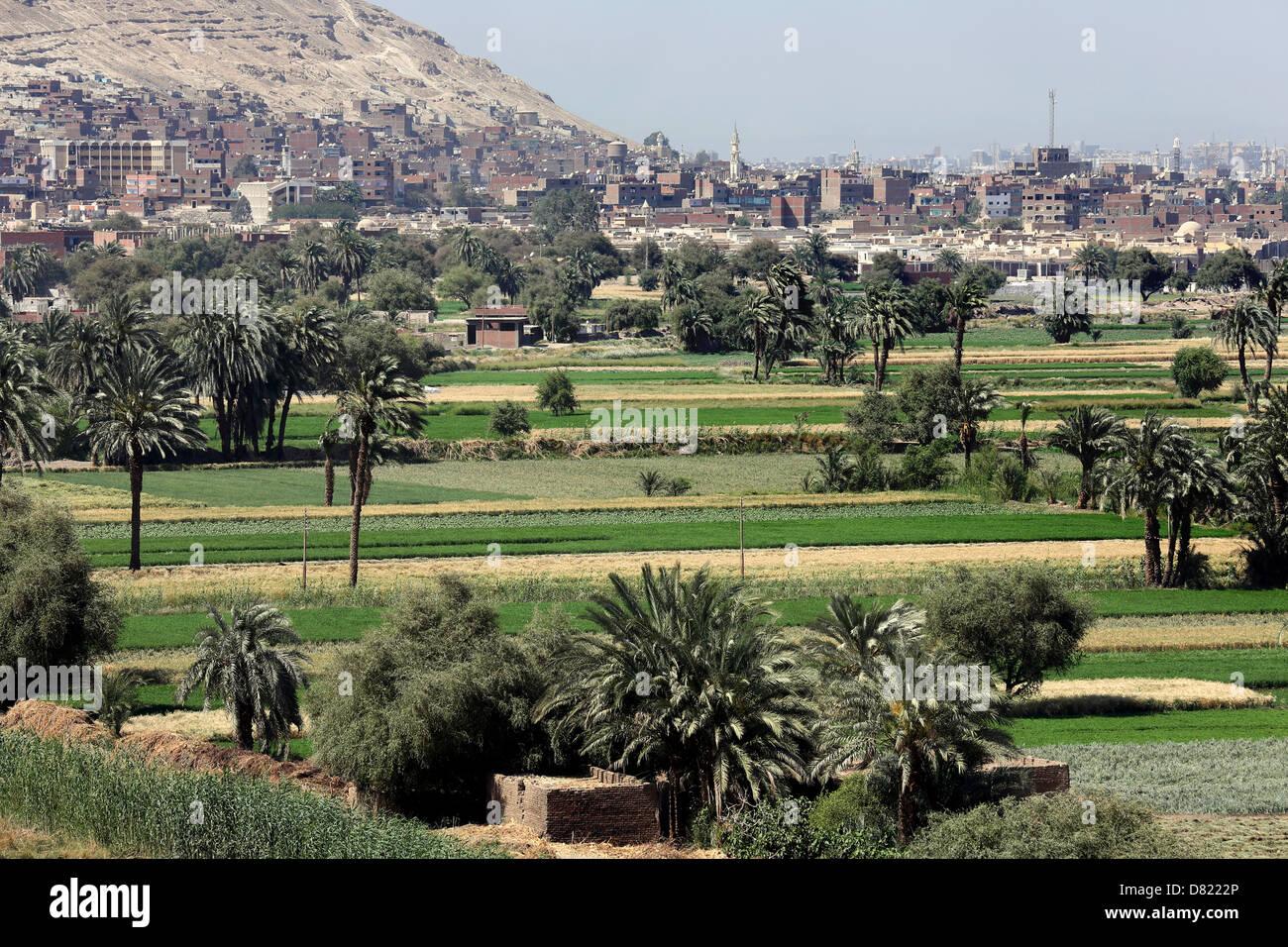 Les champs de blé de l'agriculture qui entourent la ville d'Assiout (arrière-plan), Haute Egypte Photo Stock