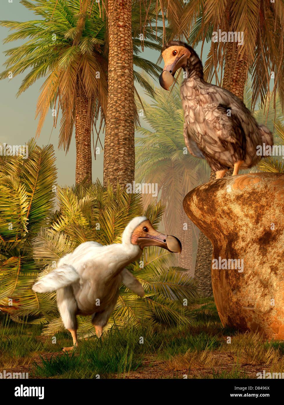 Une paire d'oiseaux Dodo jouer une partie de cache-cache. Banque D'Images