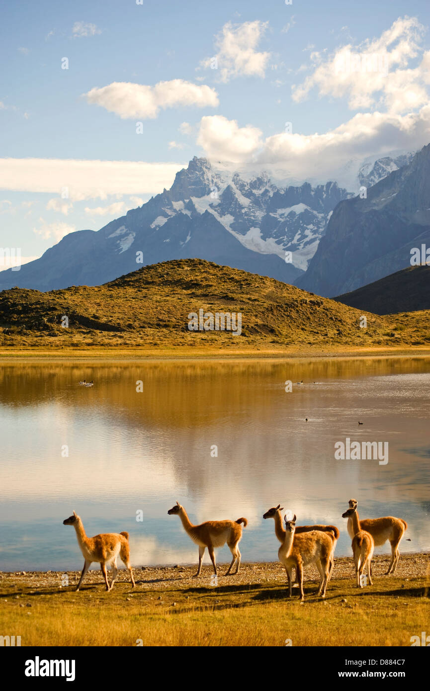 Parc National Torres del Paine, Chili Photo Stock