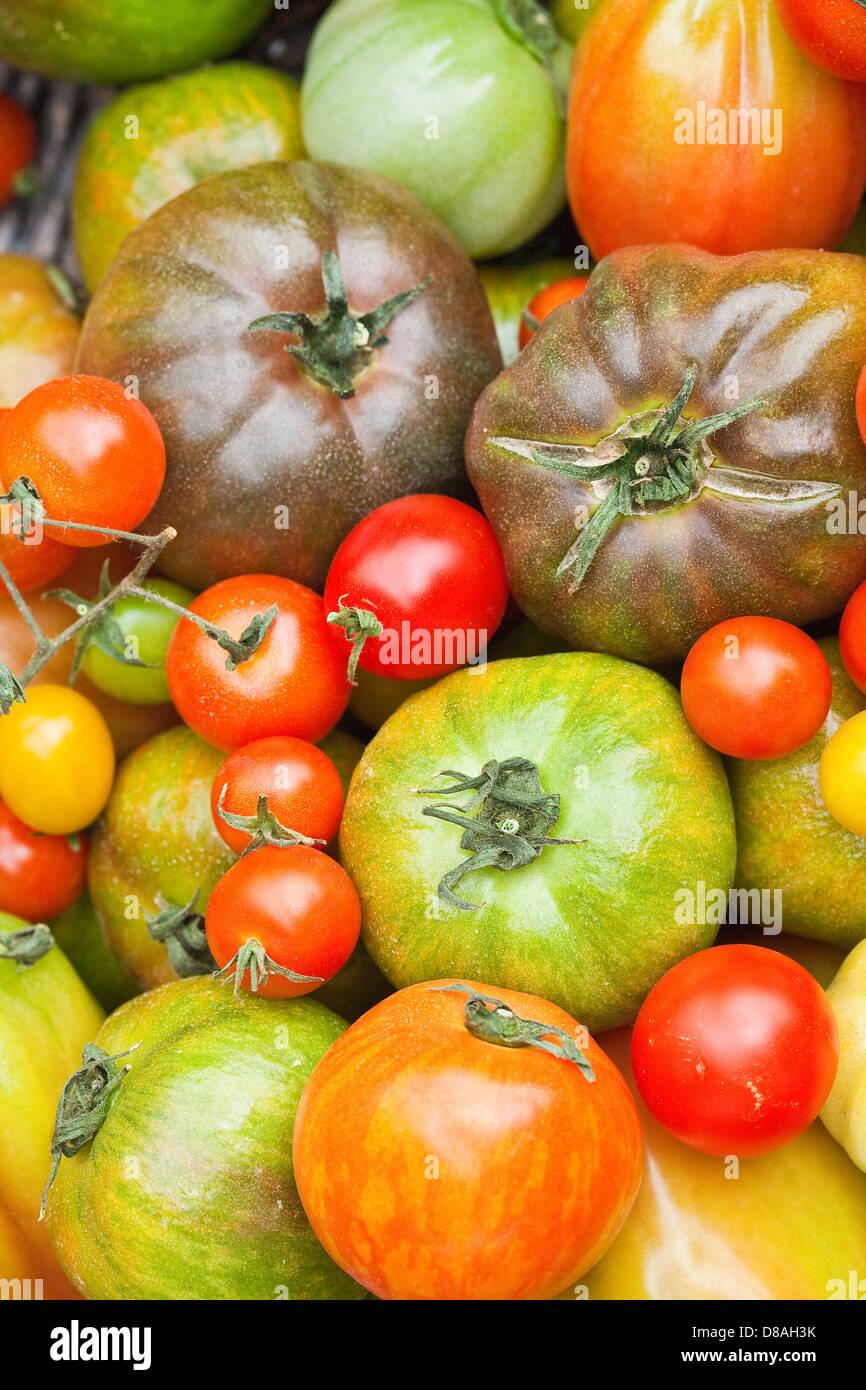Types de tomates du patrimoine mixte en titre de coups. Photo Stock