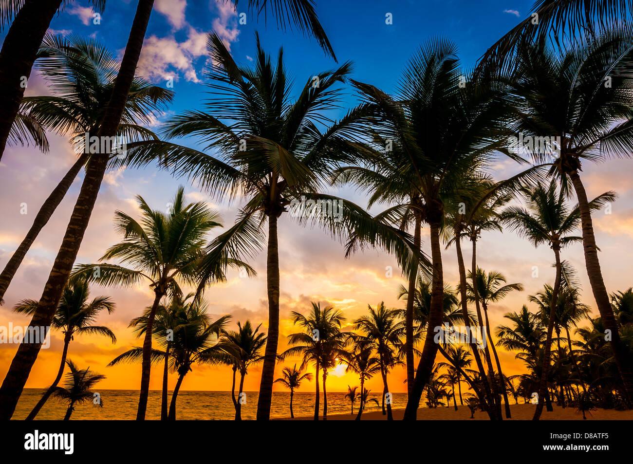 Plage; Riu Palace; Hôtel; Punta Cana, République dominicaine, Caraïbes Photo Stock