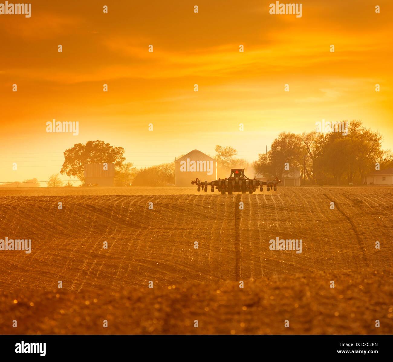 Plantation de maïs Photo Stock