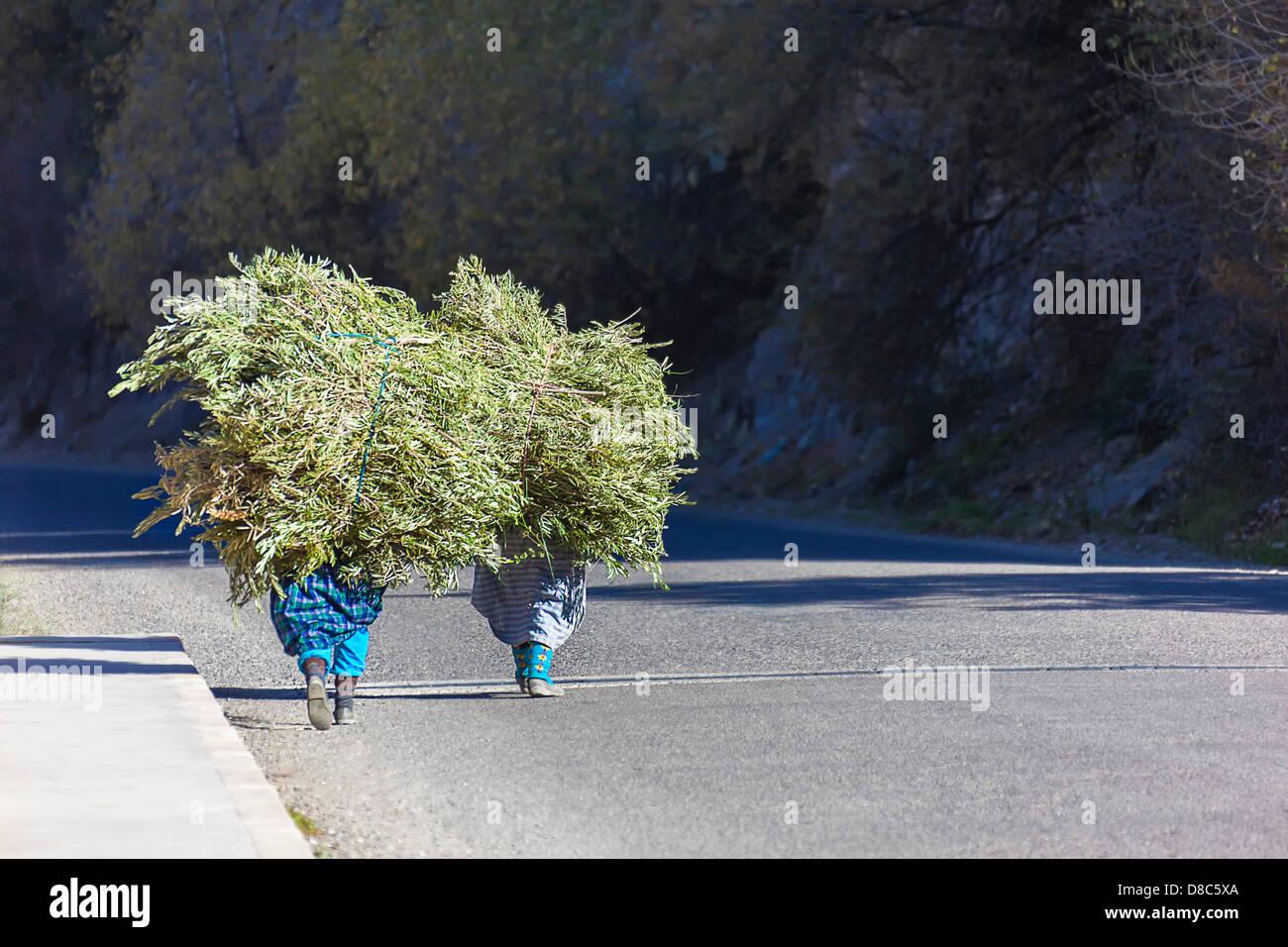 Deux farmer woman walking avec leur chargement d'herbe. Photo Stock