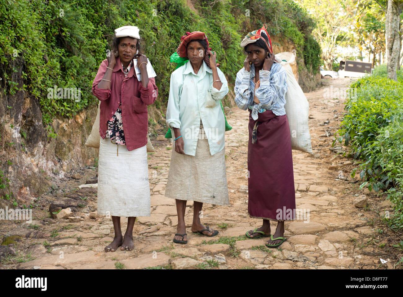 Les cueilleurs de thé trois, Ella, Sri Lanka Photo Stock