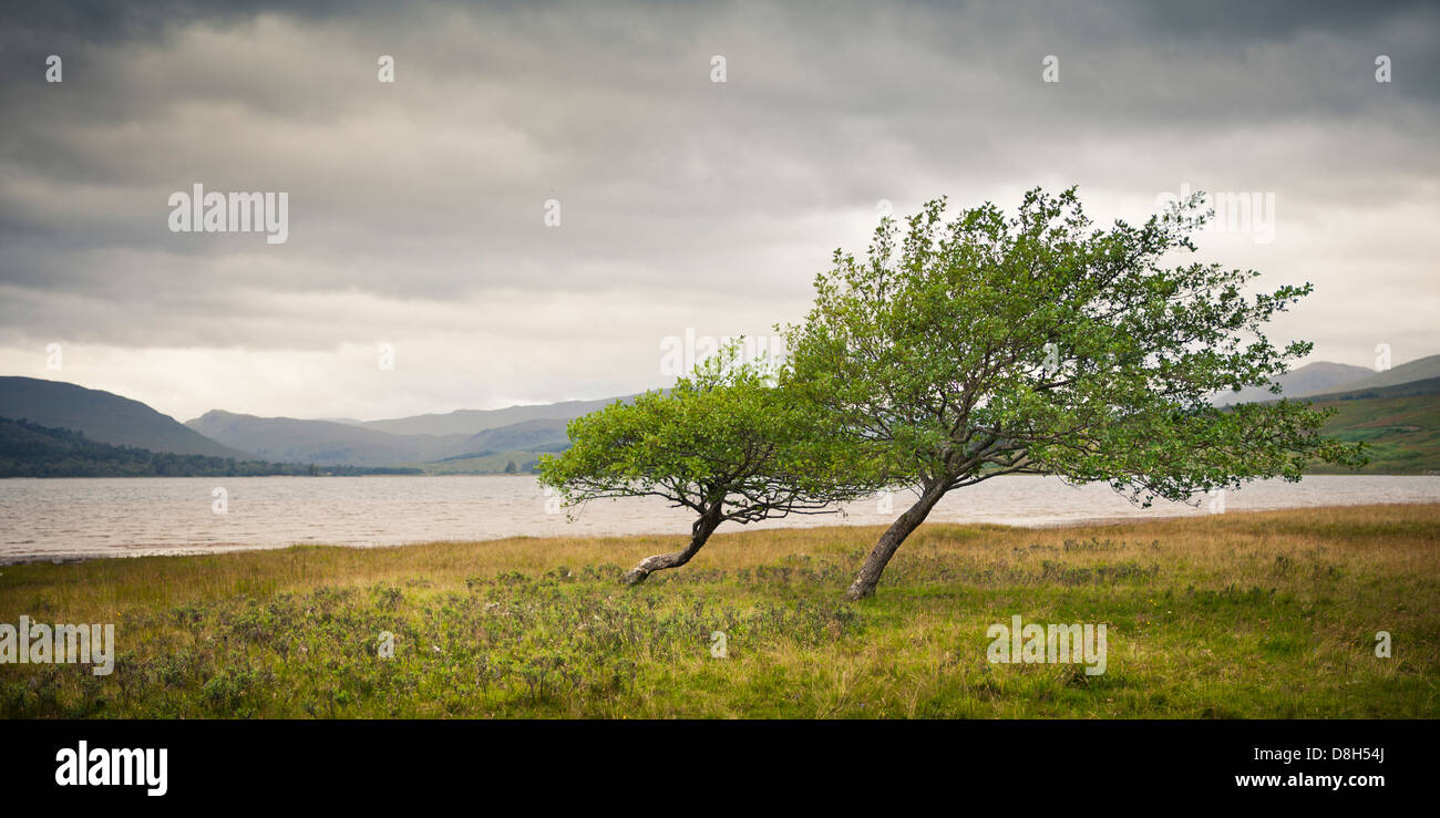 Les arbres tordus en face d'un lac dans les Highlands, Ecosse, Royaume-Uni Photo Stock