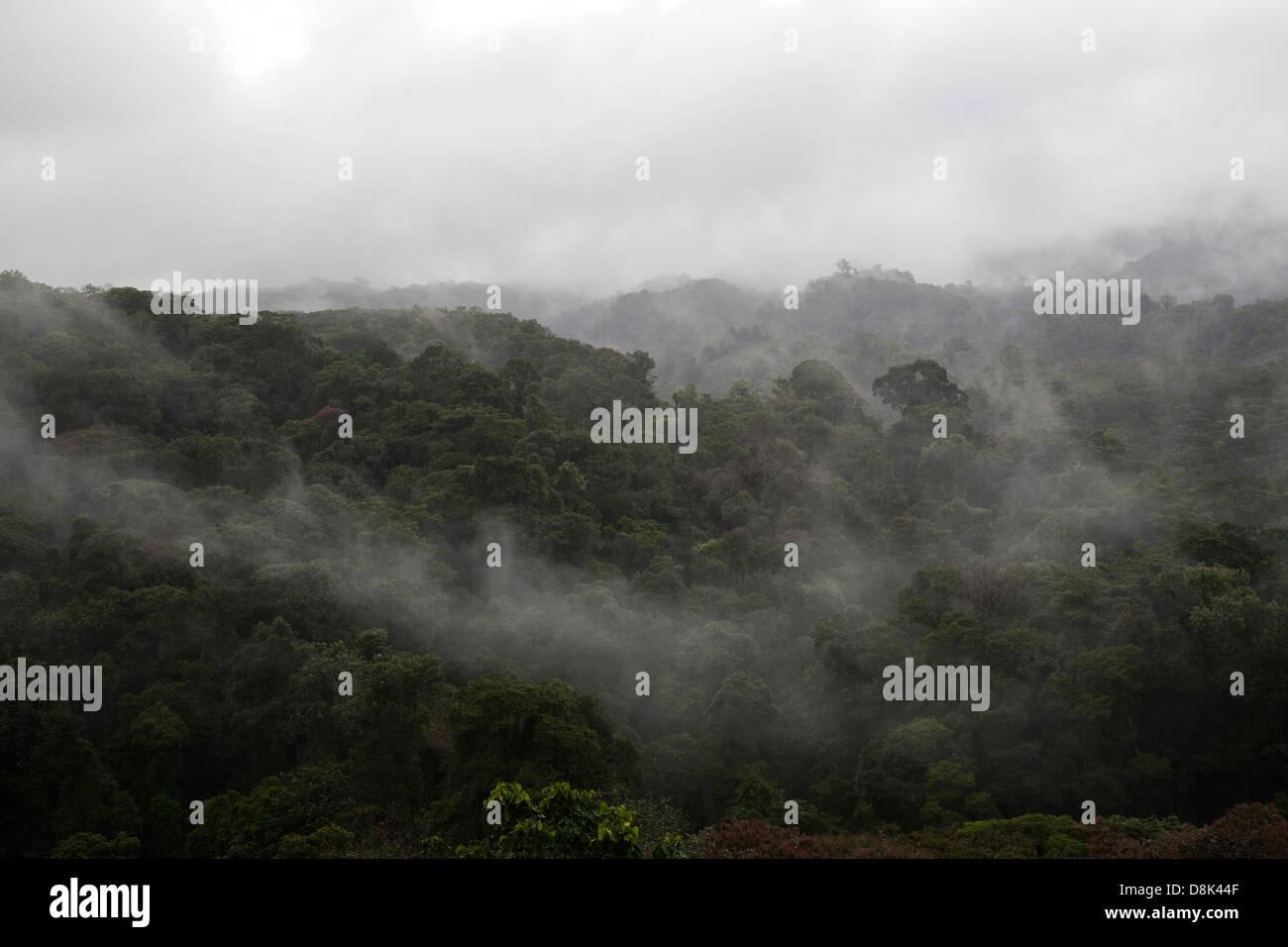 La forêt de nuages dans les montagnes centrales du Costa Rica Photo Stock