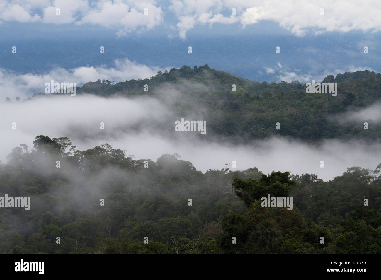 Forêt de nuages, Valle Central, Highlands, Costa Rica Photo Stock