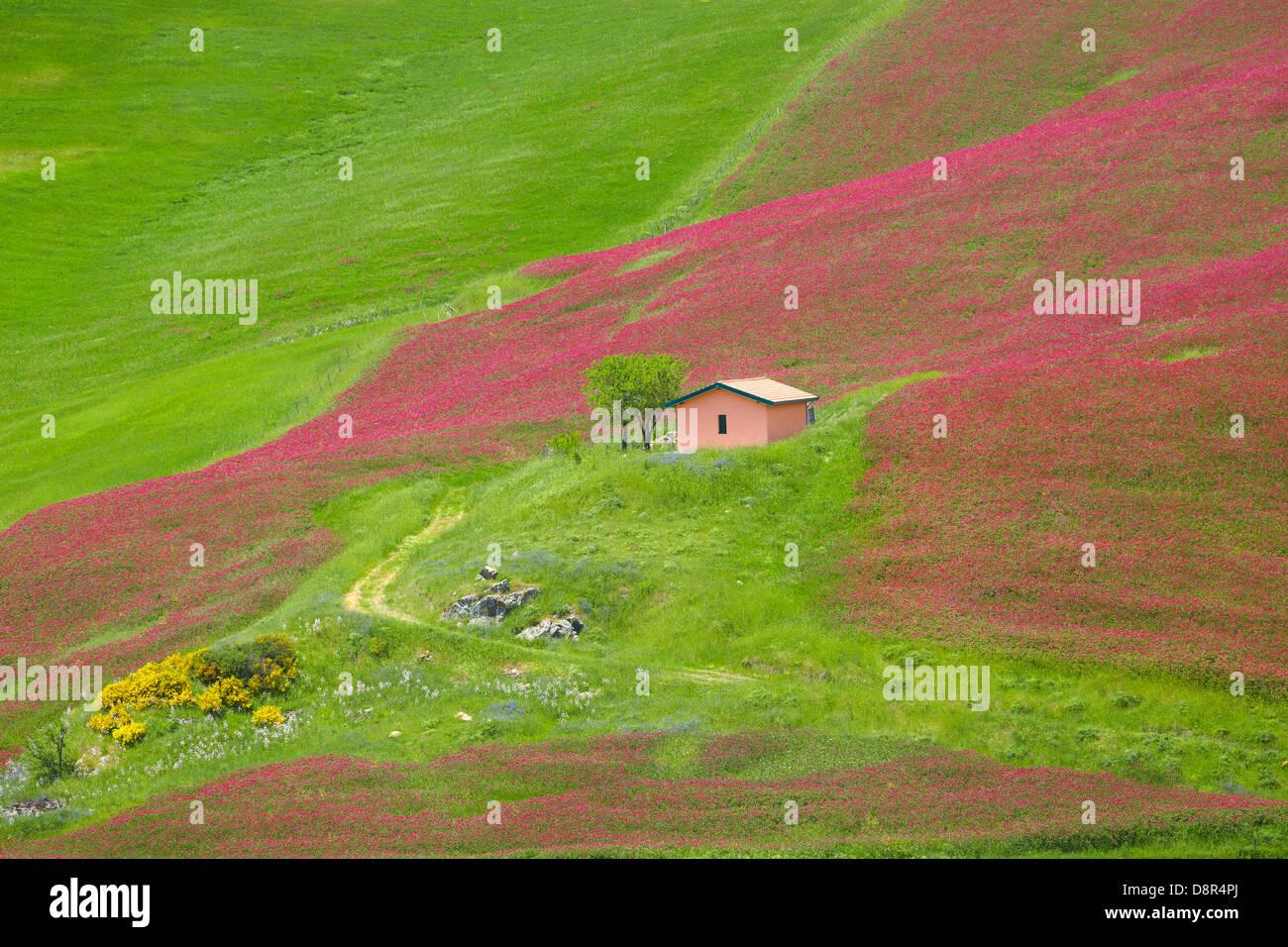 Sicile Paysage de printemps avec des fleurs et des prés dans le centre de la Sicile, Italie Photo Stock