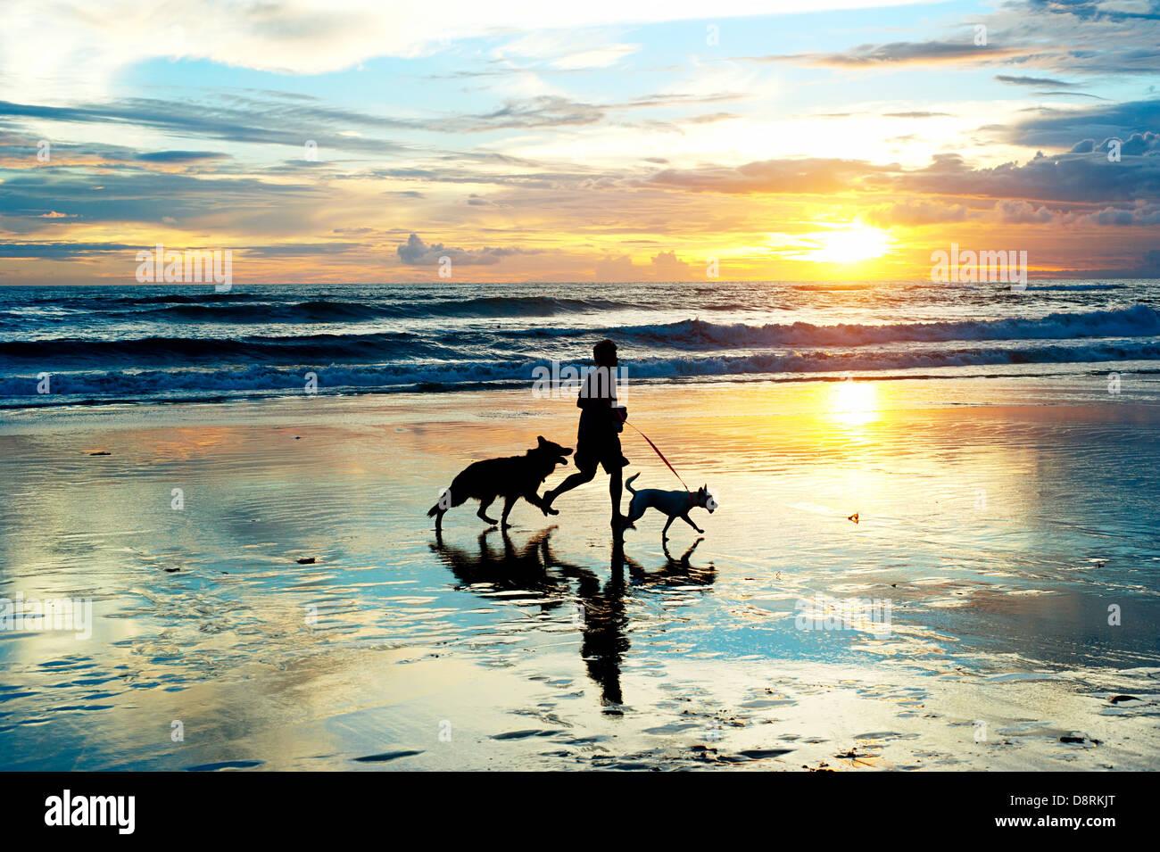Homme avec un chiens qui courent sur la plage au coucher du soleil. L'île de Bali, Indonésie Banque D'Images