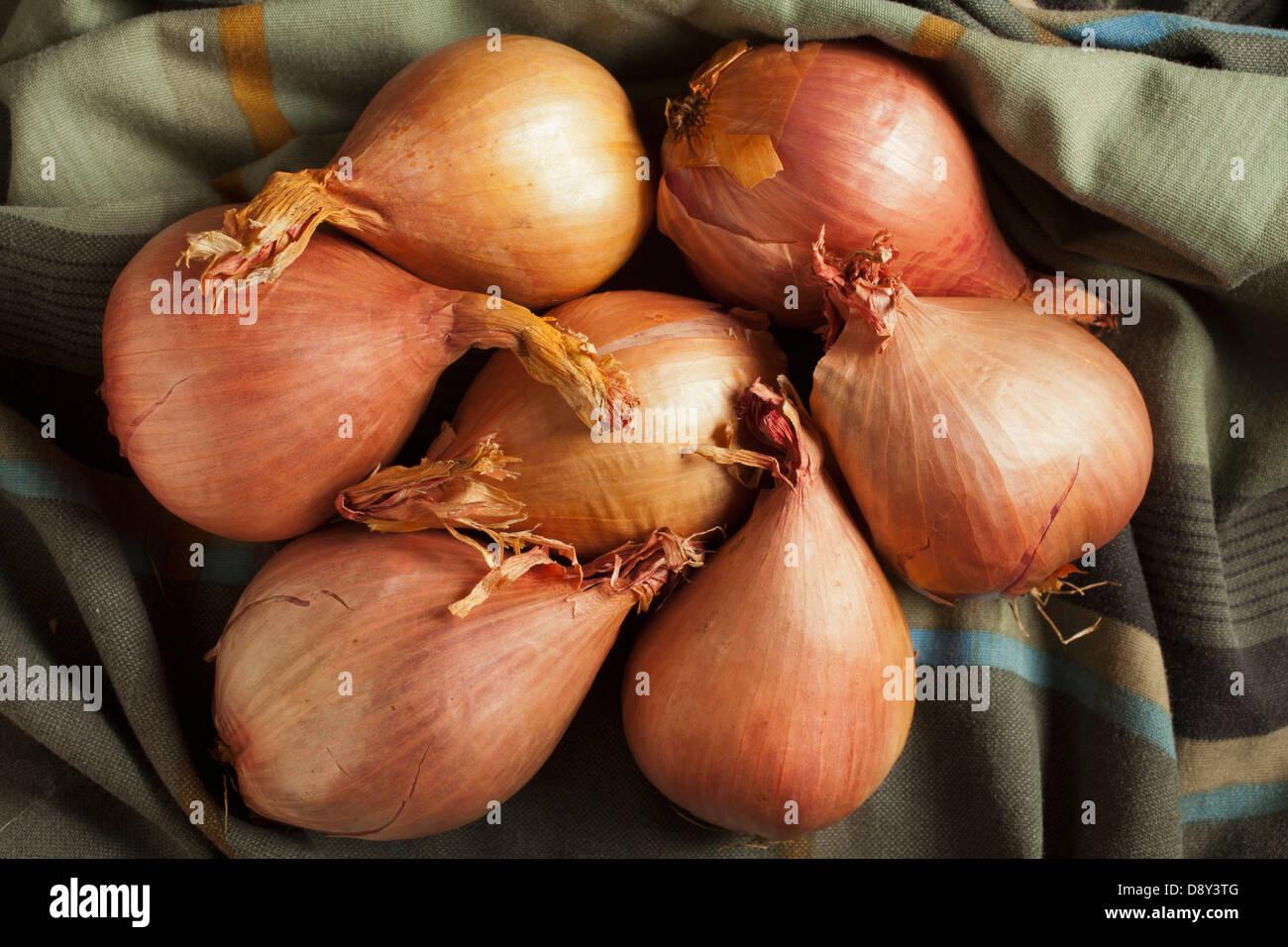 Échalotes, un ingrédient classique Photo Stock