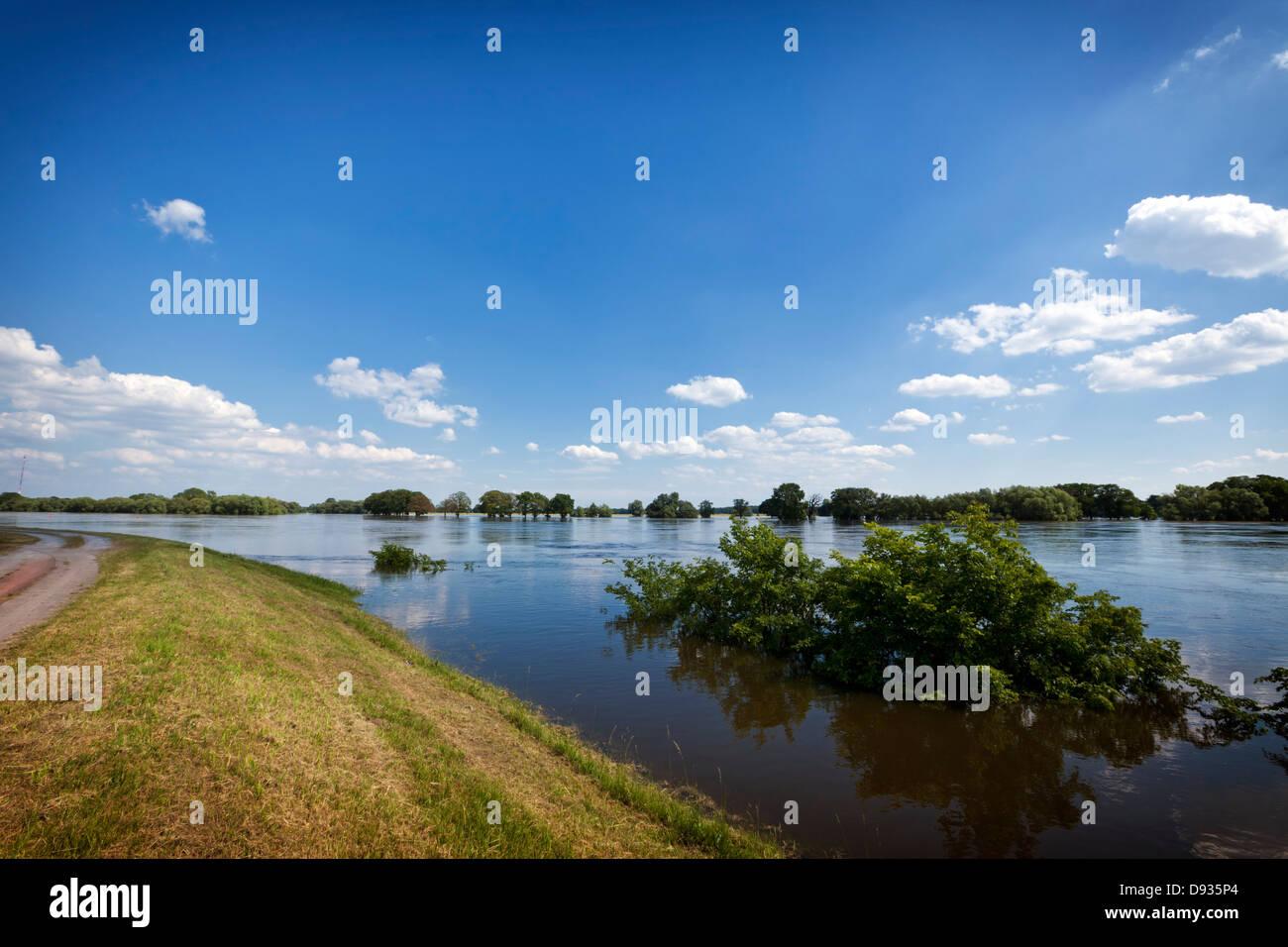La marée haute de l'Elbe, arbres immergés près de Wootz, Brandebourg Photo Stock