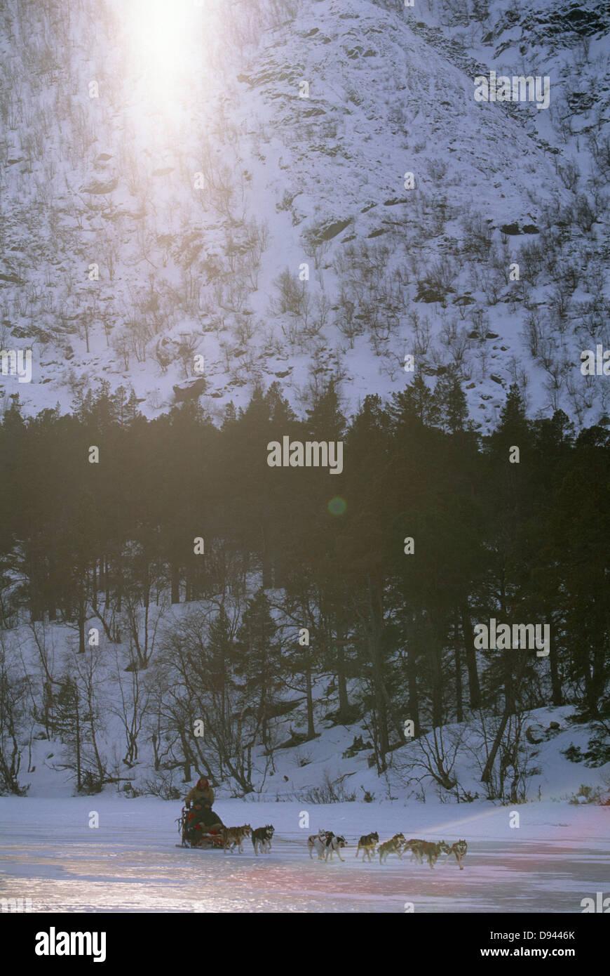 Les chiens de traîneau, avec la Suède. Banque D'Images