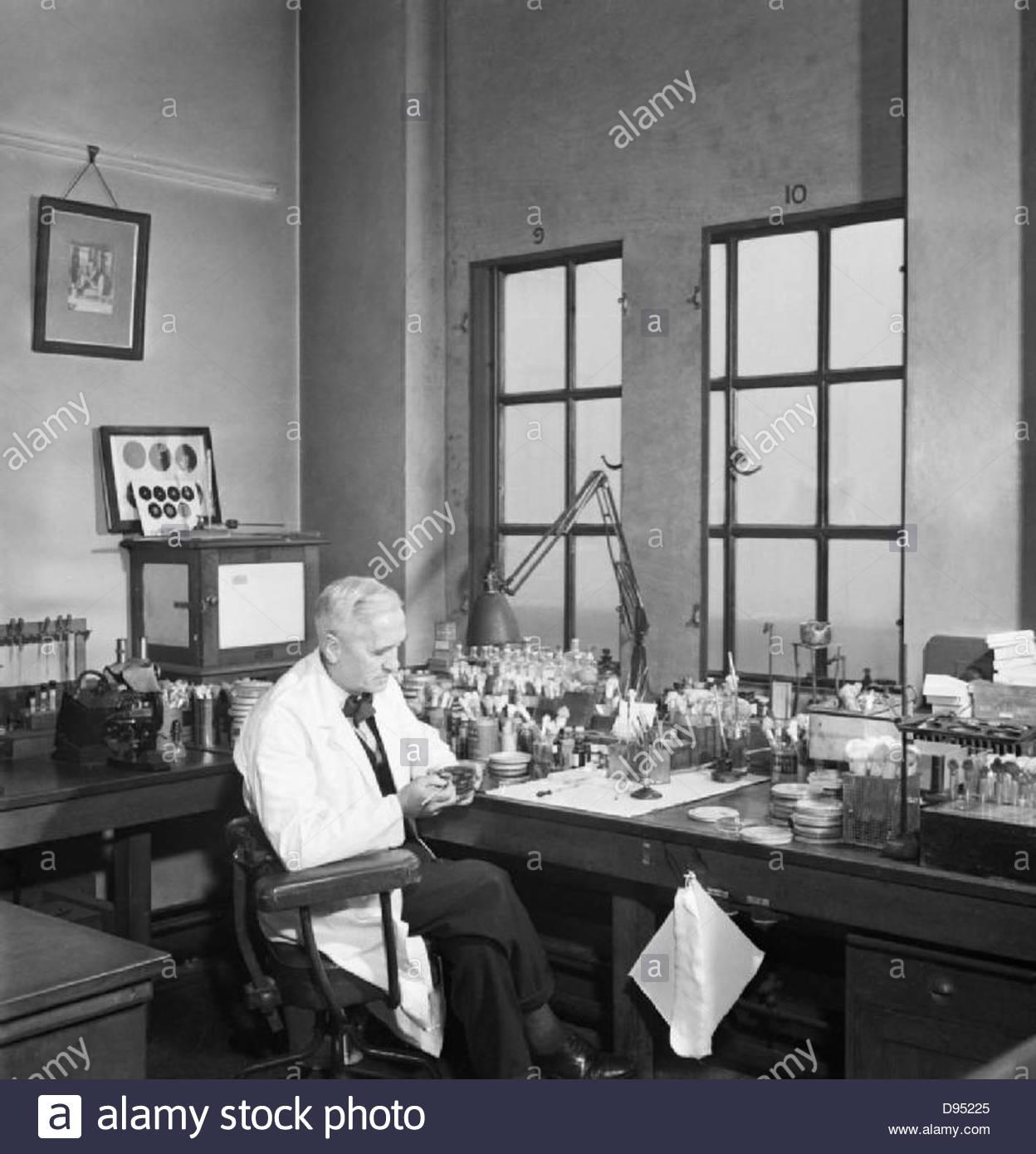 Le professeur Alexander Fleming au travail dans son laboratoire au St Mary's Hospital, Londres, pendant la Seconde Photo Stock