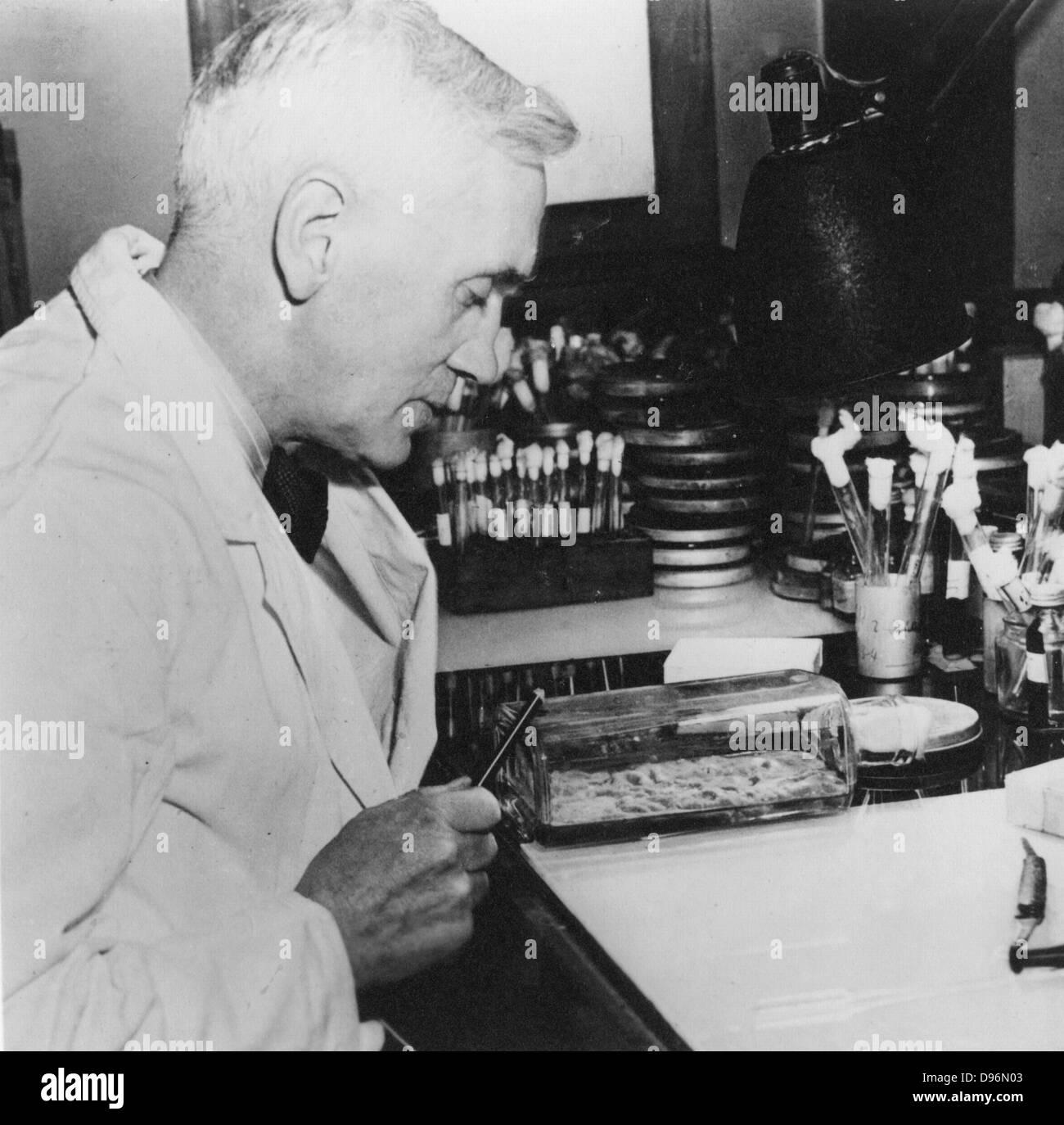 Alexander Fleming (1881-1955) bactériologiste écossais. A découvert la pénicilline en 1928. Photo Stock