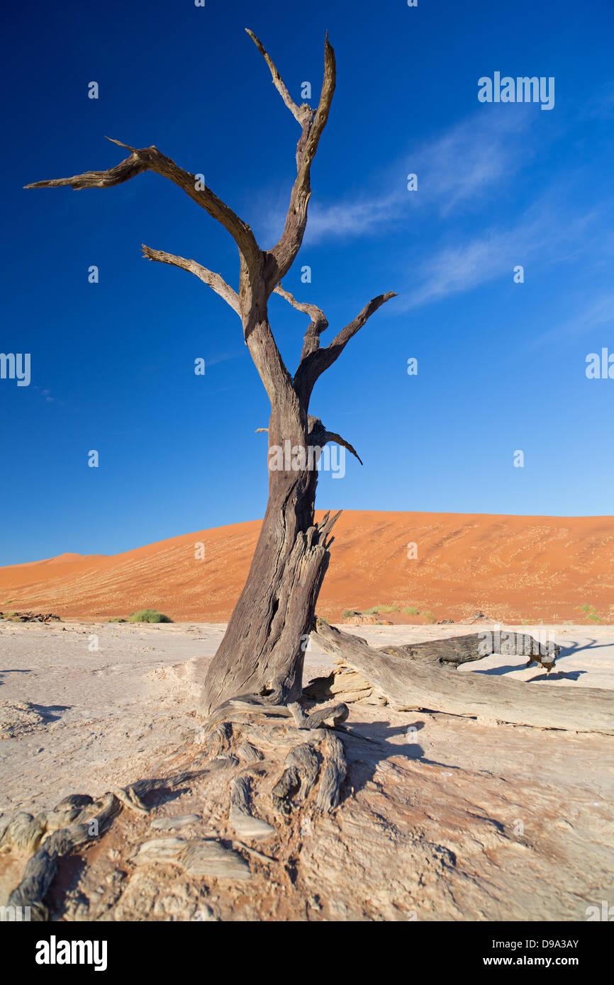 Sossusvlei, Sossusvlei, Sesriem, Namib, Namibie, désert, Wueste, ancien Wüste Photo Stock