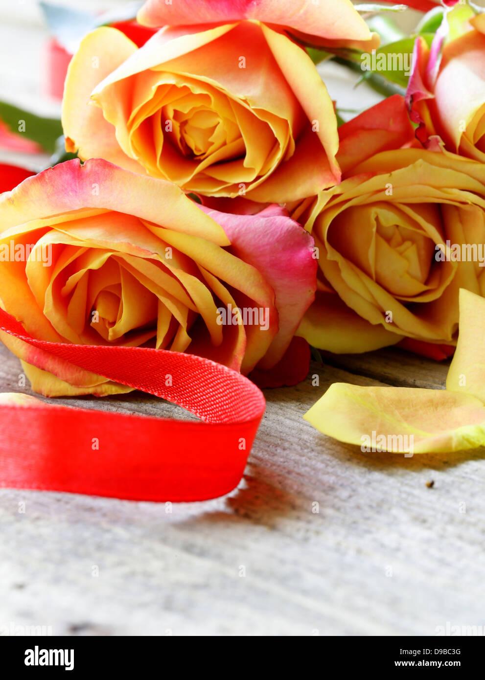 red orange roses photos red orange roses images alamy. Black Bedroom Furniture Sets. Home Design Ideas